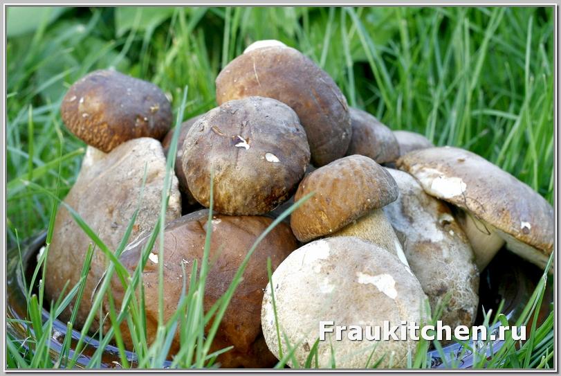 Вот из этих грибов и будем варить суп